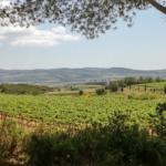 Penedès vineyard, Recaredo winery