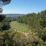 Parés Baltà vineyard, Foix Natural Park, Penedès