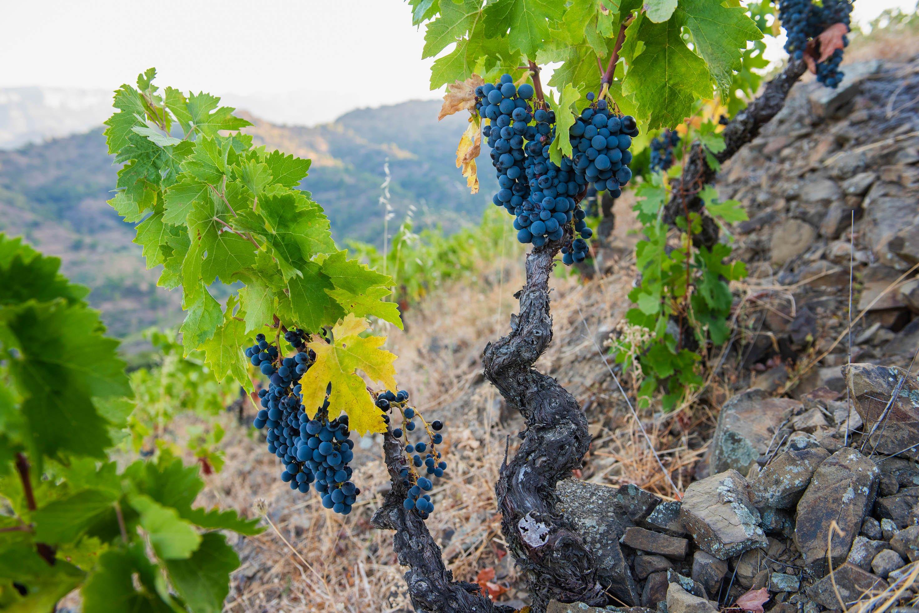 Terroir al Límit winery, Priorat. Image by Terroir al Límit