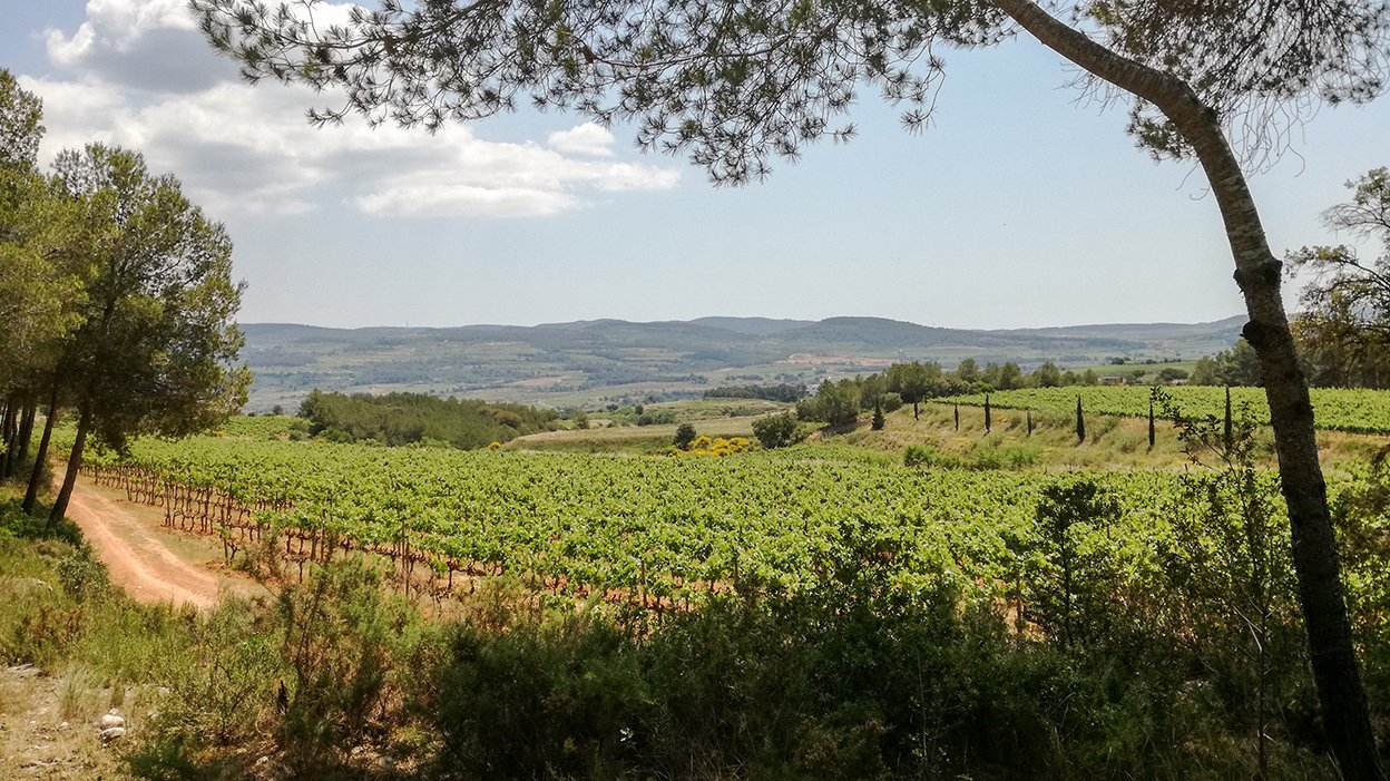 Penedès vineyard, Recaredo winery