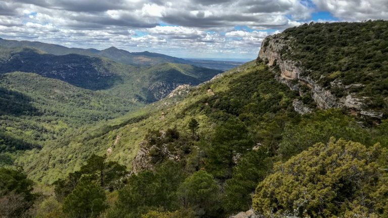 Pine and oak forest and limestone cliffs, Prades Mountains