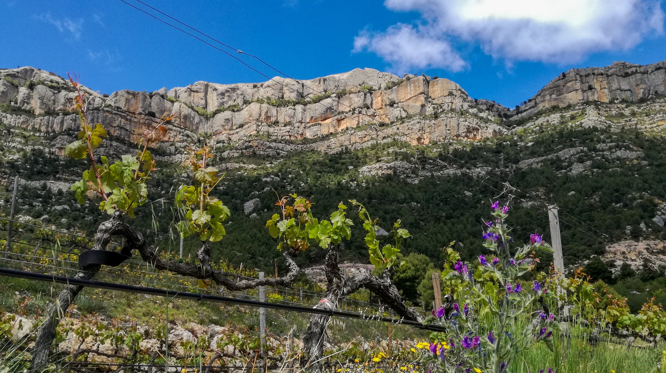 Priorat vineyards on Montsant, Cartoixa d'Escaladei Hike