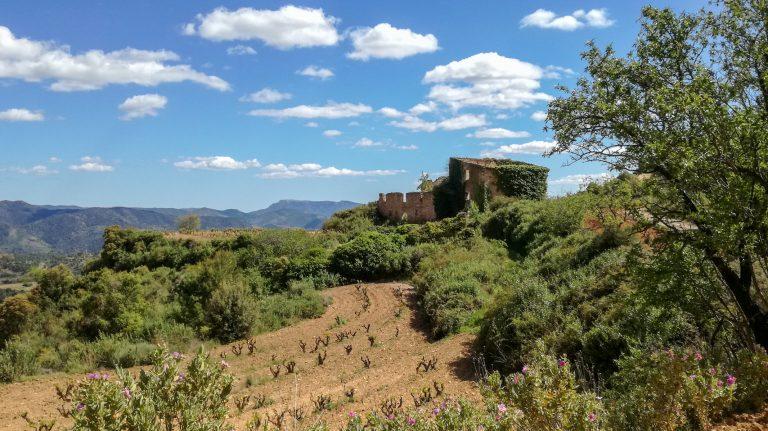 Priorat vineyards and ruins, Cartoixa d'Escaladei Hike trail