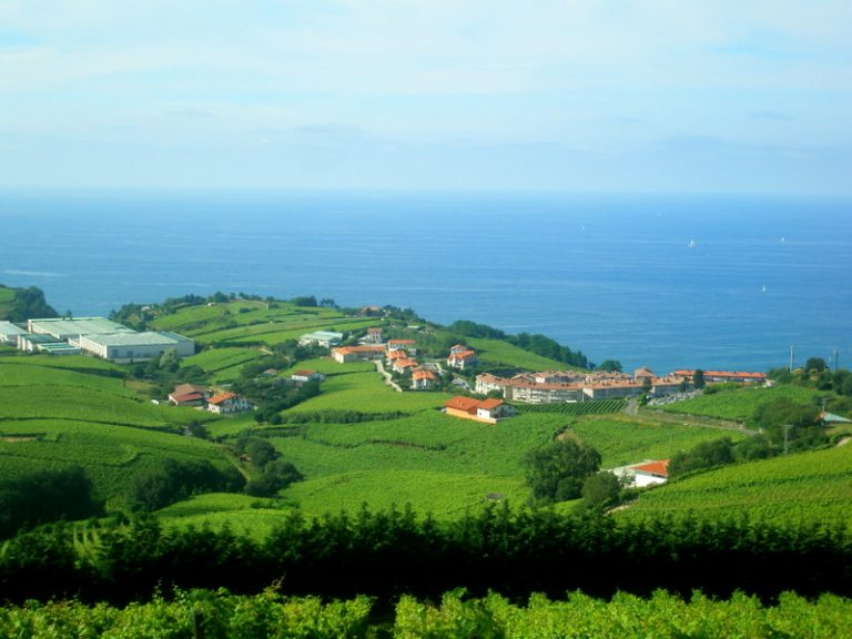 Vineyards on the coast by Getaria, Pais Vasco (Basque Country). Image by Josu CC BY 4.0