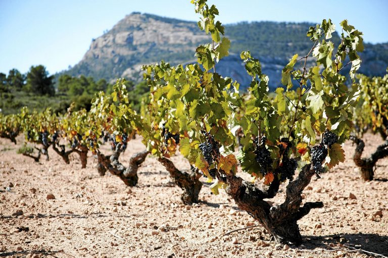 DOP Alicante vineyard De Levante Wine Region