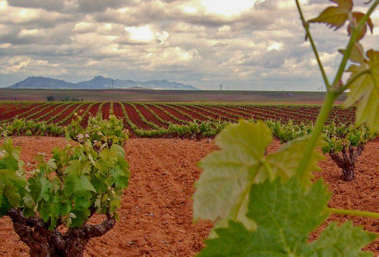 DOP Ribera del Guadiana vineyard, Extremadura