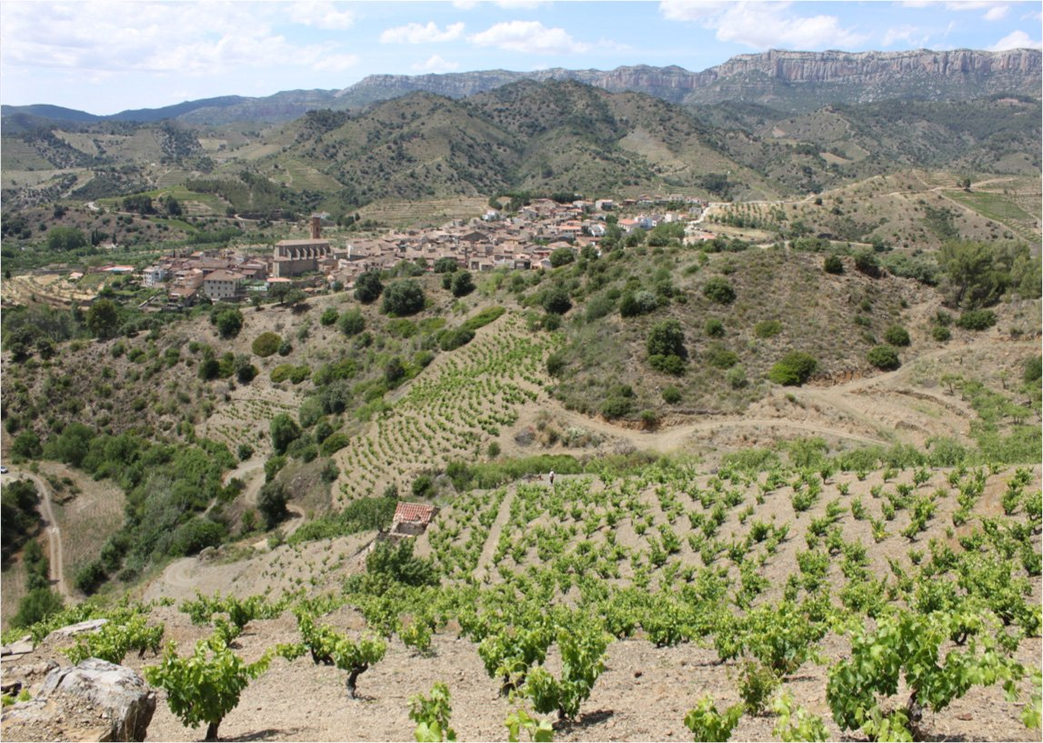 Mas Doix winery's vineyards, Priorat. Image by Mas Doix