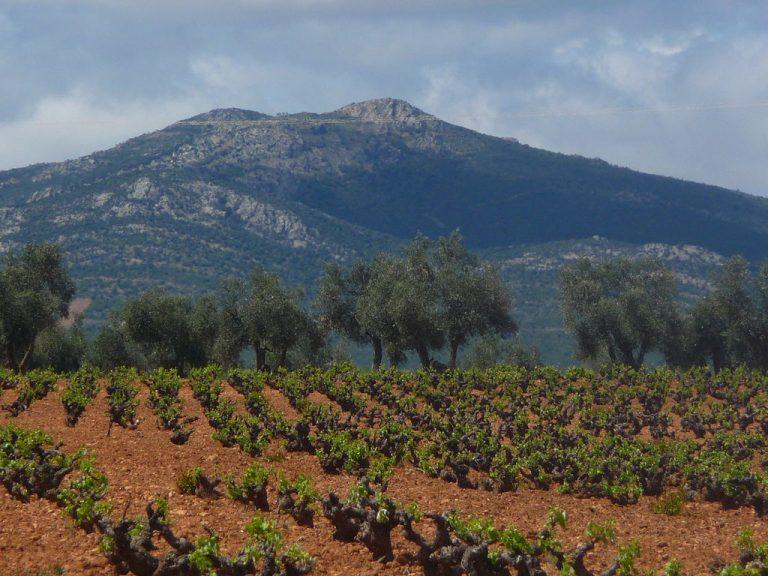 Vineyard near Montes de Toledo, Castilla-La Mancha. Image by Mssoller CC BY 4.0