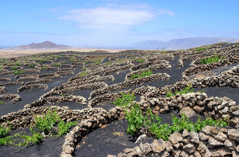 Vineyards in black volcanic soil near Tiagua, Lanzarote, Canary Islands, Spain. Image by H. Zell CC BY 4.0