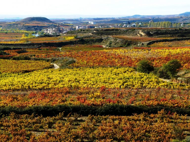 Rioja wine region, Alto Ebro. Image by Shaury CC BY 4.0